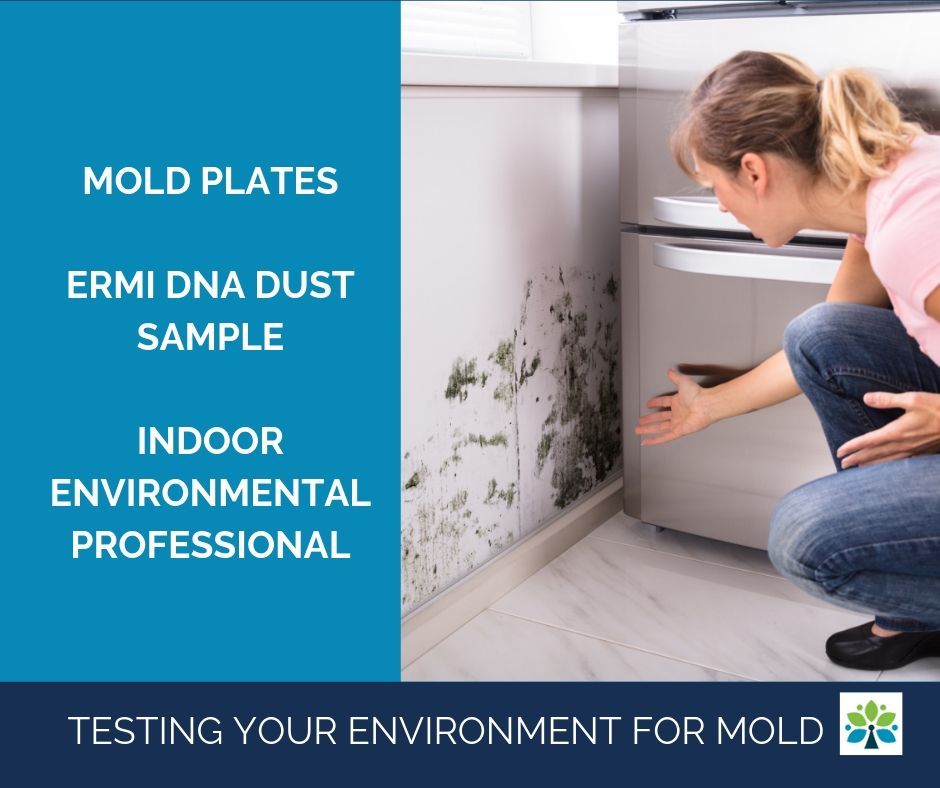 Testing Your Environment for Mold